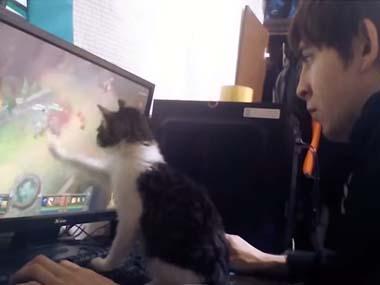 子ネコを飼っているお兄さんが「ネトゲ」をやってみた! → こうなっちゃうw