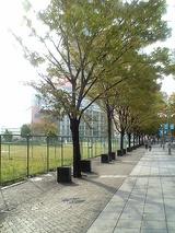 Kobe並木