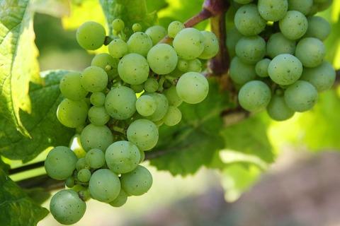 grapes-439300_12802028129