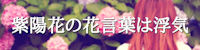 紫陽花の花言葉は浮気 ~官能小説を書きたい!~