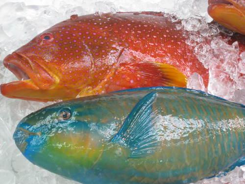 おきなわの魚
