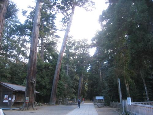 鹿島神宮森林
