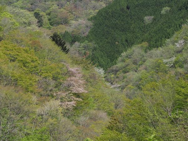 haruyama10048