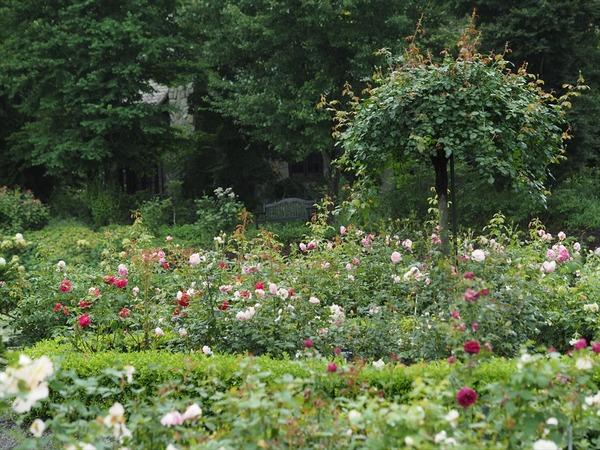 rose garden4048