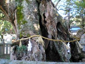 樹齢3000年