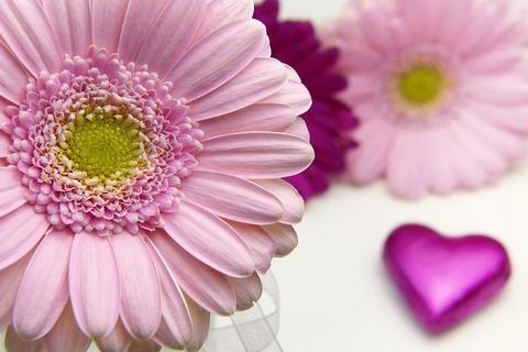 flower-3086546_640