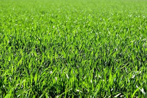 meadow-2184989_960_720