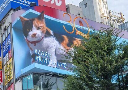 巨大3D三毛猫×ZARD