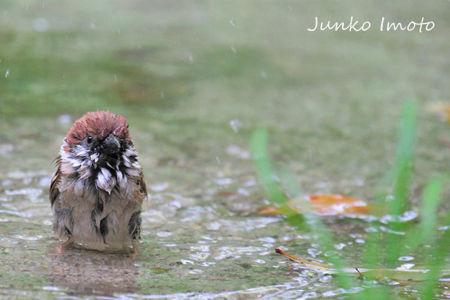 bathing6