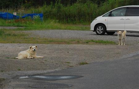 WANWAN ブログ : 【野犬の町 ...