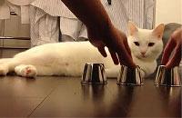 動物カップの中身をピタリと当てる天才猫