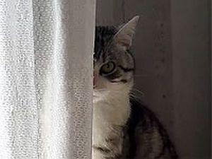 動物じー...っとこちらを見る猫