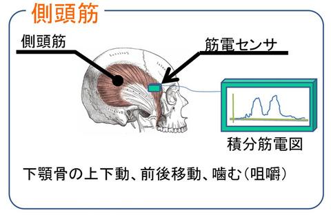 テンプラー筋電位スイッチのメカニズム
