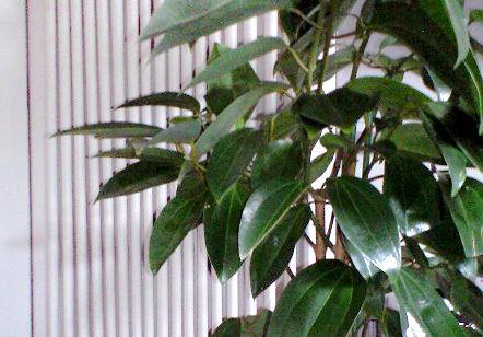 観葉植物のレンタル うらかわ園芸様
