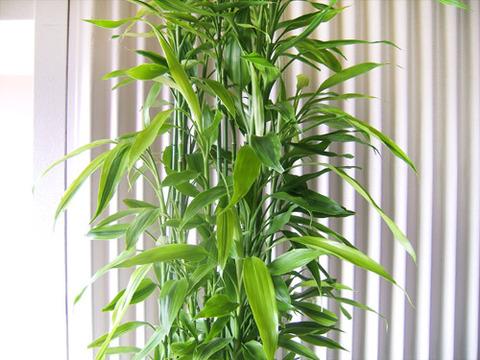 今月の観葉植物。