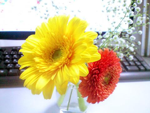 20141112_flower