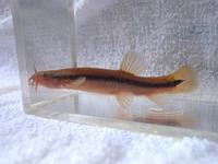 P4150168_ezohotoke1-2