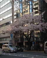 2015桜法曹ビル前