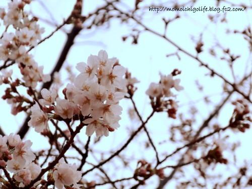 20140329_2.jpg