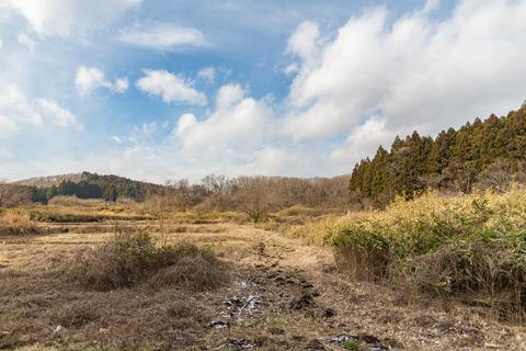 201712農地跡が見える湿地