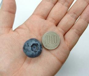 BB100円
