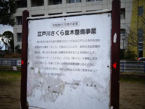 妙典小学校近くの桜植樹