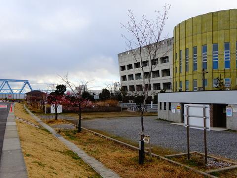 妙典小学校近くの河津桜