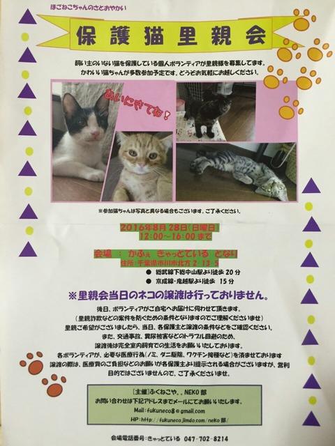 市川市で猫の里親会