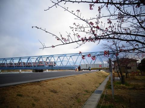 東葉高速線と河津桜2017