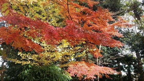 市川市須和田公園の紅葉2016