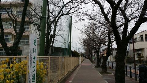 曽谷小学校前桜並木通り