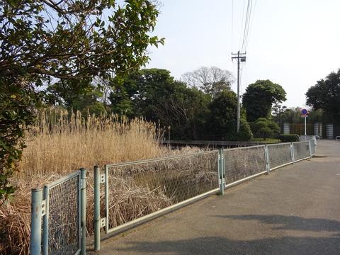 新浜鴨場前の池