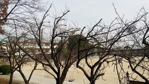 須和田公園から見る第二中学校