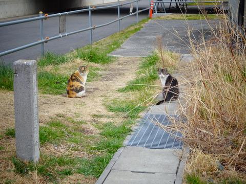 江戸川放水路河川敷の猫