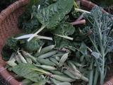スイスチャードの葉・うすいえんどう・茎ブロッコリー