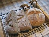 パン焼いてます