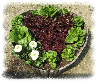 美味しそうな花壇です