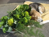 葉っぱ野菜には無関心です