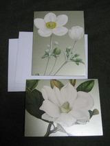 白い花のカード