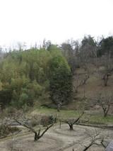 桃の山です