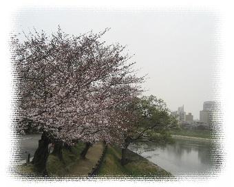 桜がもわっ・・・・・