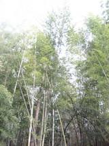 きれいな竹林でした