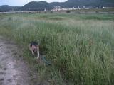 こっちは草がいっぱいです