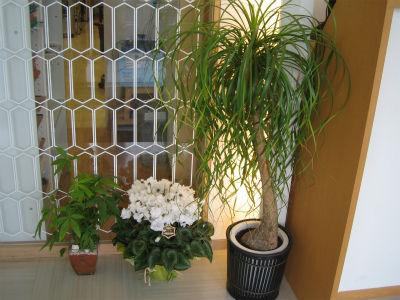 受付の植物