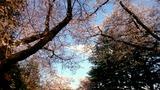 春だ!花見だ!新歓だ!
