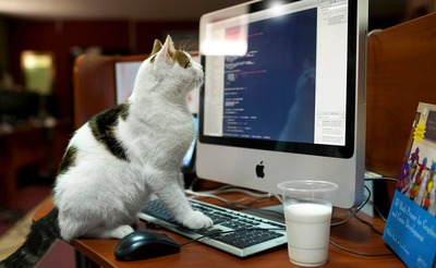 cat_programmer