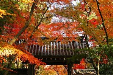 【悲報】秋、完全に消滅
