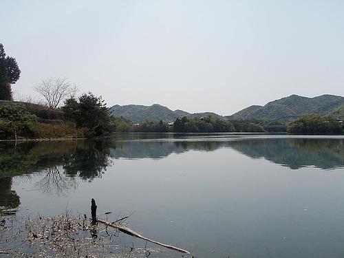青野ダム 6