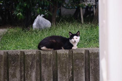 貴婦人のような表情の猫