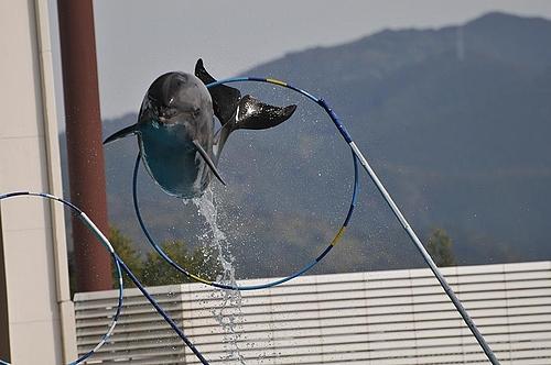 イルカ★ジャンプ!